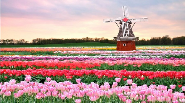 DJSI From the Tulip Fields of Holland
